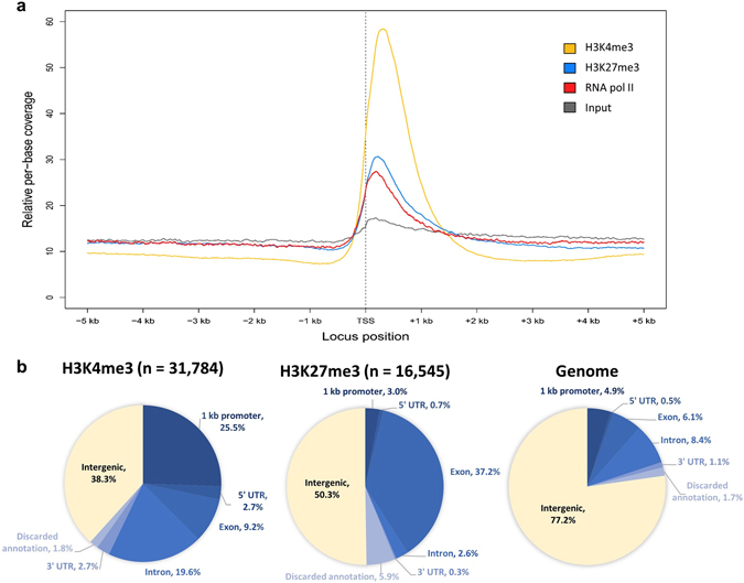 Genomic distribution of H3K4me3 and H3K27me3 in E. grandis developing xylem. ( a ) Relative per-base coverage of H3K4me3, H3K27me3, RNA pol II and input control libraries across annotated transcription start sites (TSS). ( b ) Genomic features coinciding with H3K4me3 and H3K27me3 ChIP-seq peak summits. The proportion of each annotation in the genome is indicated on the far right for comparison.