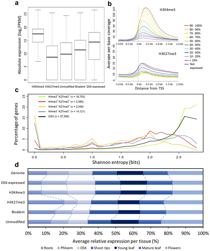 Association of H3K4me3 and H3K27me3 with gene expression levels and specificity. ( a ) Box plot of absolute expression values of genes from different epigenomic categories. The absolute expression profile for developing secondary xylem (far right) is shown for comparison. ( b ) Average per-base coverage of H3K4me3 (top) and H3K27me3 (bottom) ChIP-seq libraries around the transcription start site (TSS) of genes expressed at various levels in developing secondary xylem. ( c ) Tissue-specificity distribution of genes marked by different combinations of H3K4me3 and H3K27me3, as measured by the Shannon entropy index (calculated for genes with nonzero expression in at least one tissue). All pairwise combinations are statistically significant (Kolmogorov-Smirnov test, P
