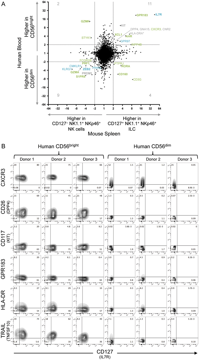 Expression differences between mouse splenic CD127 + NK1.1 + NKp46 + ILC and CD127 − NK1.1 + NKp46 + NK cells show commonalities with differences between human blood CD56 bright and CD56 dim cells. ImmGen microarray data examining mouse splenic NK1.1 + NKp46 + CD127 + CD27 + cells (annotated as ILC1) and NK1.1 + NKp46 + CD127 − CD27 +/− NK cells 23 is analysed to show fold-change difference between subsets (x-axis). For all mouse genes with corresponding human genes in the NCBI Homologene database, this is contrasted with microarray expression differences observed between human blood CD56 bright and CD56 dim populations (y-axis) (HTA2.0 microarray) 21 . Transcripts differing by ≥2-fold between both human and mouse subsets are labelled, and their numbers are shown. Transcripts similarly varying by ≥2-fold in mouse ILC1/NK comparisons in both liver and small intestine (in addition to spleen) are shown in blue; those differing by ≥2-fold in 2-of-3 comparisons of mouse tissues are in green (see Suppl. Figure 3 ). Bold names also show ≥2-fold differences in an independent microarray dataset comparing human CD56 bright and CD56 dim cells (see Suppl. Figure 4 ). Although not matched by Homologene, human HLA-DRA (paired with mouse H2-Aa) is shown (with asterisk) but not included in transcript counts. ( B ) Flow cytometry staining of gated human blood CD56 bright CD16 − CD3 − or CD56 dim CD16 + CD3 − populations from three donors. Quadrant gates were set using fluorescence minus one (FMO) stains.