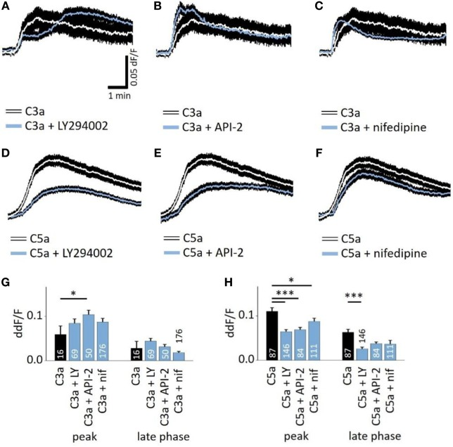 Role of PI3-kinase and Akt in anaphylatoxin-evoked Ca 2+ transients. (A,D) Effect of the PI3-kinase blocker LY294002 (50 µM) on C3a-evoked (A) or C5a-evoked (D) Ca 2+ transients in ARPE-19 cells. (B,E) Effect of the Akt blocker API-2 (10 µM) on C3a-evoked (B) or C5a-evoked (C) Ca 2+ transients in ARPE-19 cells. (C,F) Effect of the L-type channel blocker nifedipine (10 µM) on C3a-evoked (C) or C5a-evoked (F) Ca 2+ transients in ARPE-19 cells. (G,H) Statistical comparison of blocker application effects on C3a-evoked (G) and C5a-evoked (H) Ca 2+ -transients at the peak and late phases. Anaphylatoxins were applied at concentrations of 260 nM (C3a) and 52 nM (C5a). (A–F) Black rim indicates SEM. (G,H) data are mean + SEM, number of cells as indicated in the bars from six to nine independent experiments, * p