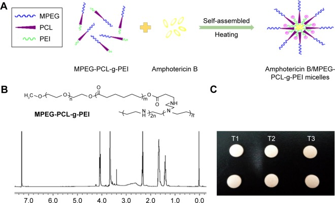 ( A ) Spontaneous AmB-loaded micelles formation from amphiphilic molecules in aqueous media; ( B ) the chemical formula and the 1 H-NMR spectra (400 MHz, CDCl 3 ) of MPEG-PCL-g-PEI; ( C ) buccal tablets containing AmB+DOC (T1), AmB+MPEG-PCL-g-PEI physical mixtures (T2), and AmB/MPEG-PCL-g-PEI micelles (T3). Abbreviations: AmB, amphotericin B; MPEG-PCL-g-PEI, monomethoxy poly(ethylene glycol)-poly(epsilon-caprolactone)-graft-polyethylenimine; DOC, sodium deoxycholate.