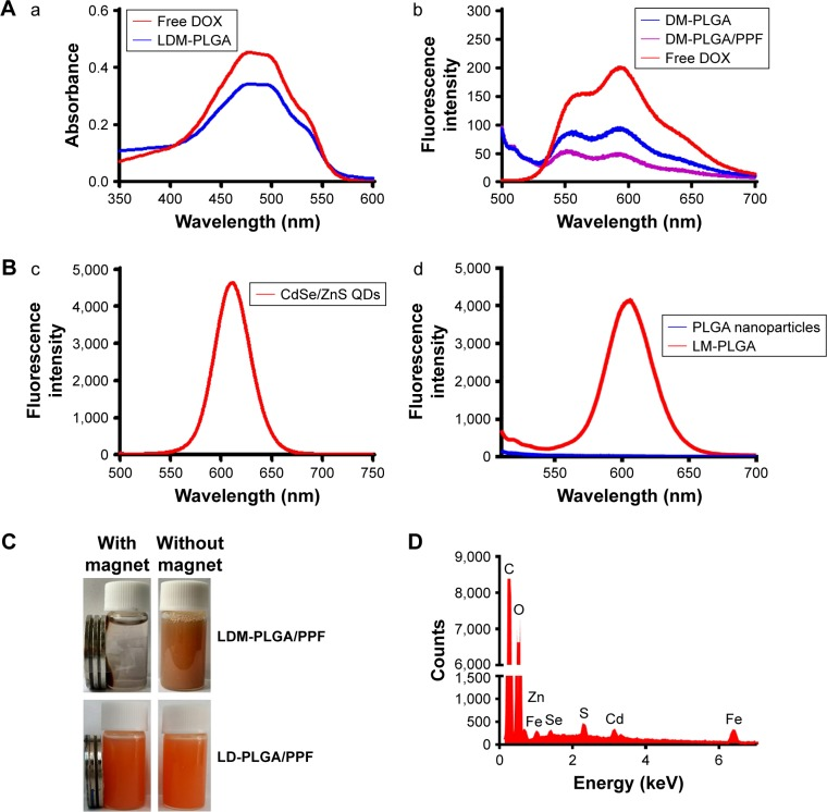 UV-vis and photoluminescent characterization. Notes: ( A ) UV-vis absorption (a) and photoluminescence spectra (b) of free DOX and the as-prepared nanoparticles. ( B ) Photoluminescence spectra of CdSe/ZnS QDs (c) and LM-PLGA (d) (excitation wavelength 490 nm). ( C ) Photographs of LDM-PLGA/PPF and LD-PLGA/PPF with or without an applied magnetic field. ( D ) Elemental analysis of LDM-PLGA nanoparticles. Abbreviations: DOX, doxorubicin; PLGA, poly( d,l -lactic- co -glycolic acid); PPF, PEI-PEG-FA; PEI-PEG-FA, polyethyleneimine premodified with polyethylene glycol-folic acid; QDs, quantum dots.