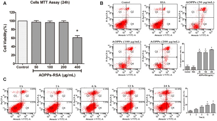 Advanced oxidative protein products -induced DRG neurons apoptosis. (A) Viability of DRG neurons treated with AOPPs at different concentrations. (B) Representative dot blots of Annexin V–FITC versus PI. Primary DRG neurons were incubated with AOPPs–RSA for the indicated concentrations or unmodified RSA for 24 h. (C) DRG neurons were incubated with 100 μg/mL AOPPs–RSA for the indicated time durations. Apoptosis was quantified by measuring the number of combined early and late apoptotic cells using flow cytometry and was found to increase in a concentration and time-dependent manner. Data represent mean ± SEM of at least three independent experiments. ∗ P