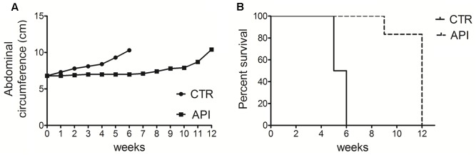 "Apigenin reduced tumor growth and increased the survival in C57BL/6 mice intraperitoneally transplanted with MM #40a cells. (A) Differences in mean abdominal circumferences between C57BL/6 mice treated with API or with DMSO-PBS (CTR). (B) Differences in the mean survival duration of C57BL/6 mice treated with API or with DMSO-PBS (CTR). The numbers of inoculated mice are reported in the Section ""Materials and Methods""."
