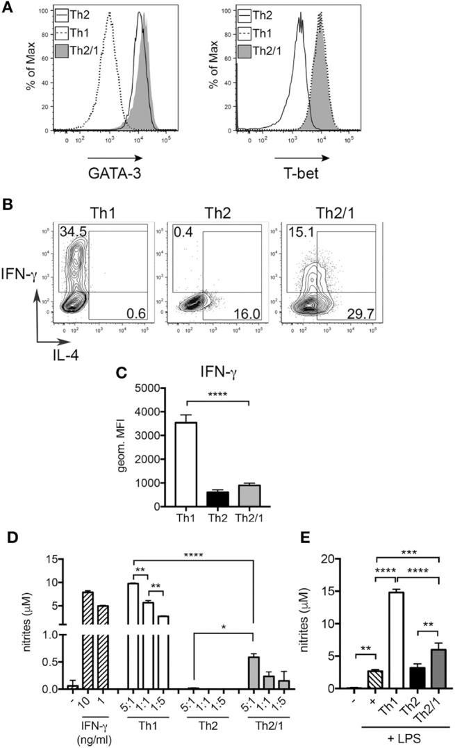 Th2/1 cells are capable of supporting classical macrophage effector function. Murine Th1, Th2, and Th2/1 hybrid cells were generated from naïve CD4 + T cells in vitro and surveyed for (A) GATA-3 (left) and T-bet (right) expression. (B) IL-4 and IFN-γ expression by in vitro -generated Th1, Th2, and Th2/1 cells in response to PMA/ionomycin stimulation. (C) Geometric mean fluorescence intensity of IFN-γ in Th1, Th2, and Th2/1 hybrid cells. (D) Nitrite accumulation in supernatant of peritoneal macrophages left untreated (–), stimulated with recombinant IFN-γ or incubated with Th1, Th2, and Th2/1 cells in the depicted T cell:macrophage ratios for 24 h. (E) Nitrite concentrations in supernatant of macrophages left untreated (–), stimulated with LPS or co-cultured with T cells (1:1 ratio) in presence of LPS. Mean and SD of five cultures is shown. Data are representative for three independent experiments. * p