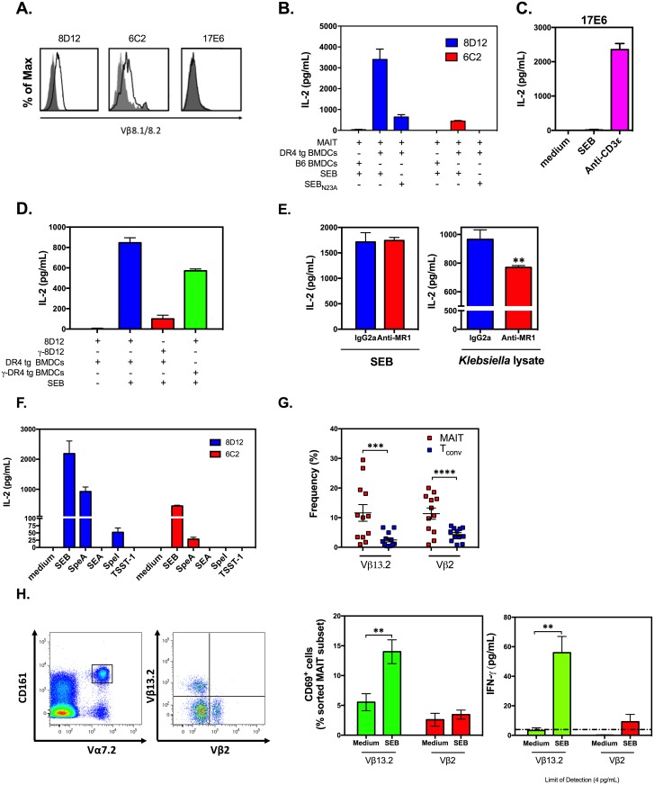 Mouse and human mucosa-associated invariant T (MAIT) cells can be activated by staphylococcal and streptococcal superantigens (SAgs) in a T cell receptor (TCR) Vβ-dependent manner. Mouse MAIT hybridoma lines 8D12, 6C2, and 17E6 were evaluated by flow cytometry for TCR Vβ8.1/2 expression ( A ). Indicated hybridoma(s) were exposed to 100 ng/mL of staphylococcal enterotoxin B (SEB) ( B-F ), SEB N23A ( B ), or several SAgs other than SEB ( F ) or stimulated with 0.5 μg/mL of an anti-CD3ε mAb ( C ) or with Klebsiella lysate ( E ) in the presence of DR4-transgenic (DR4 tg) bone marrow-derived dendritic cells (BMDCs) ( B-F ), wild-type C57BL/6 (B6) BMDCs ( B ), or γ-irradiated DR4 tg BMDCs ( D ). In several experiments, 5 μg/mL of an MHC-related protein 1 (MR1)-blocking monoclonal antibody (mAb) or an IgG2a isotype control was added to 8D12 cultures prior to stimulation with SEB or Klebsiella lysate ( E ). Culture supernatants were collected after 24 h, and interleukin (IL)-2 levels were quantified by ELISA. Representative data from 3 to 4 independent experiments yielding similar results are illustrated in panels A-F. Error bars represent SD to demonstrate variation among technical replicates. The frequencies of TCR Vβ13.2 + and Vβ2 + MAIT and conventional T (T conv ) cell subsets were determined among human peripheral blood mononuclear cells (PBMCs) isolated from 12 donors ( G ). To purify the above MAIT cell fractions, CD3 + Vα7.2 + CD161 + PBMCs were co-stained with monoclonal antibodies (mAbs) to TCR Vβ13.2 and Vβ2. MAIT cell subsets were then sorted and co-incubated with autologous CD14 + monocytes in the absence or presence of SEB ( n = 3 to 4). Twenty-four hours later, CD69 + cell percentages and interferon (IFN)-γ levels in culture supernatants were determined ( H ). Error bars in panels G and H represent SEM. **, ***, and **** indicate p