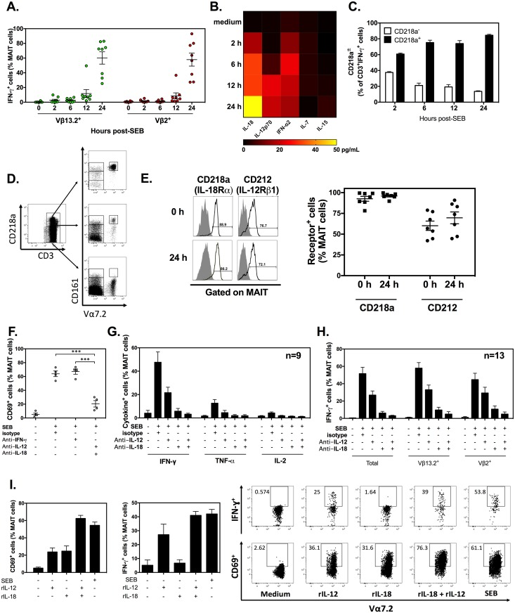 Staphylococcal enterotoxin B (SEB) can activate human mucosa-associated invariant T (MAIT) cells by an interleukin (IL)-12/IL-18-dependent mechanism. Peripheral blood mononuclear cells (PBMCs) were exposed to SEB for 24 h, and interferon (IFN)-γ + events were enumerated among Vβ13.2 + and Vβ2 + MAIT cells ( A ). Human PBMCs ( n = 4) were stimulated with SEB before culture supernatants were harvested at indicated time points to assay for IL-18, IL-12p70, IFN-α2, IL-7, and IL-15. Data were averaged to generate a heat map ( B ). The relative frequencies of CD218a + and CD218a - cells within the CD3 + IFN-γ + gate was determined at indicated time points post-SEB stimulation ( n = 3) ( C ). CD3 + cells exhibiting high, intermediate and low surface levels of CD218a were further analyzed for CD161 and Vα7.2 positivity ( D ). CD218a and CD212 expression by MAIT cells was assessed in untreated and SEB-stimulated PBMC cultures ( n = 7) ( E ). Filled and open histograms correspond to staining with isotype controls and anti-CD218a/CD212, respectively ( E ). In several experiments, neutralizing monoclonal antibodies (mAbs) to IFN-γ, IL-12, and/or IL-18 (or isotype control[s]) were added to PBMC cultures prior to SEB stimulation. Twenty-four hours later, the percentages of CD69 + ( F ) and cytokine + events ( G-H ) were determined among total ( F-H ) or fractionated ( H ) MAIT cells. In additional cultures, PBMCs were stimulated for 24 h with SEB or with recombinant human IL-12 (rIL-12) and/or recombinant human IL-18 (rIL-18) in parallel before cell-surface expression of CD69 ( n = 8) and intracellular IFN-γ accumulation ( n = 4) in MAIT cells were evaluated ( I ). Error bars represent SEM, and *** indicates a statistically significant difference with p