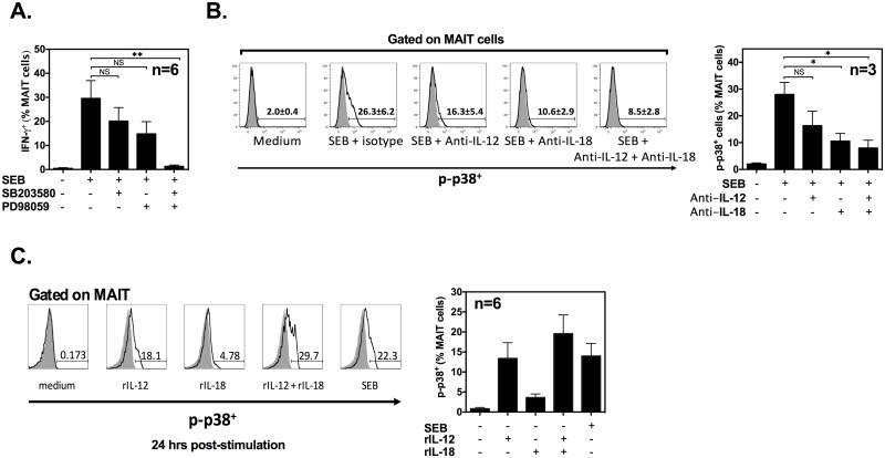 IL-12/IL-18-mediated transactivation of mucosa-associated invariant T (MAIT) cells following staphylococcal enterotoxin B (SEB) stimulation requires signaling through p38 and MEK1/2. Human peripheral blood mononuclear cells (PBMCs) ( n = 6) were exposed to SEB in the absence or presence of 20 μM SB203580 and/or PD98059, and intracellular interferon (IFN)-γ accumulation in MAIT cells was detected after 24 h by flow cytometry ( A ). Intracellular phosphorylated p38 was traced in MAIT cells after stimulation with SEB in the absence or presence of anti-IL-12 and/or anti-IL-18 monoclonal antibodies (mAbs). Representative FACS plots are shown along with a bar graph summarizing data obtained from 3 individuals (*: p