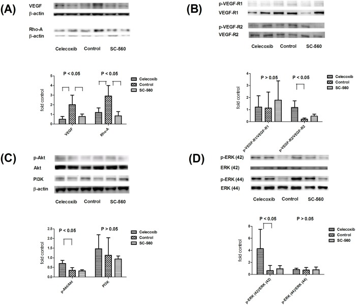 Pulmonary protein expressions of VEGF, RhoA, VEGFR-1, VEGFR-2, Akt, PI3K and ERK. SC-560 and celecoxib significantly down-regulated VEGF and RhoA expressions (6A). The phosphorylated VEGFR-2 expression was significantly up-regulated by celecoxib (6B). The phosphorylated Akt and ERK (42) protein levels were also significantly up-regulated by celecoxib (6C D). The PI3K and phosphorylated ERK (44) expressions were not significantly influenced by celecoxib (6C D).