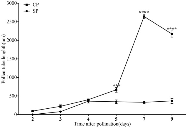 The lengths of the majority of D. longicornu pollen tubes present in compatible and incompatible styles at different times after pollination. Pollen tubes were measured at 2 D, 3 D, 4 D, 5 D, 7 D, and 9 D after pollination. Each point is a mean value based on measurements of tubes in three styles, and the error bars represent ± the standard error of the mean. P -values were calculated by two-way repeated measures analysis of variance (ANOVA) using Sidak's post hoc -test in GraphPad Prism 6 ( ∗∗∗ P
