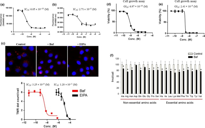 Inhibition of intracellular pH regulation, macropinocytosis, intracellular amino acid levels, and cell growth by a vacuolar (H + )‐ ATP ase (V‐ ATP ase) inhibitor. (a,b) Acridine Orange and AcidiFluor assays were undertaken in T‐24 bladder cancer cells 2 h after treatment with the indicated concentrations (Conc.) of bafilomycin A1 ( n = 4). Fluorescence (544/640 nm and 514/563 nm) was designated as the Y ‐axis. Data are presented as mean ± SD . (c) Macropinosome visualization was carried out with tetramethylrhodamine‐conjugated <t>BSA</t> ( <t>TMR</t> ‐ BSA ) for 30 min in T‐24 cells after 1 h pretreatment with 100 nM bafilomycin A1 (Baf) and 30 μM 5‐( N ‐ethyl‐ N ‐isopropyl) amiloride ( EIPA ). TMR dots (red) show levels of macropinocytosis. The macropinocytosis assay using TMR ‐ BSA was carried out in the same manner with the indicated concentrations of bafilomycin A1 or EIPA ( n = 4). TMR dots/cell are designated as the Y ‐axis. Data are presented as the mean ± SD . (d,e) T‐24 cells and HCT 116 colon cancer cells were treated with the indicated concentrations of bafilomycin A1. After 3 days, cell viability was assessed. Ordinate values were obtained by setting the control group value as 100%. Data are presented as mean ± SD ( n = 3). (f) Amino acid levels were analyzed in HCT 116 cells 8 h after treatment with 3 nM bafilomycin A1 using capillary electrophoresis time‐of‐flight mass spectrometry ( n = 3). Ordinate values were obtained by setting the control group value as 100% and designated as the Y ‐axis. Data are presented as mean ± SD . * P