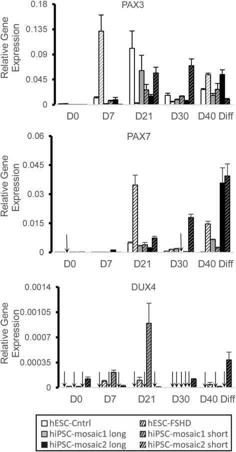 RNA expression profiles of myogenic regulators PAX3 and PAX7 and DUX4 expression in cultures of human ES cells and iPS cell clones during myogenic differentiation. RNA was isolated at five time points (D0, D7, D21, D30, and D40) representing early, middle, and late stages of myogenesis. Quantitative PCR of PAX3, PAX7, and DUX4 RNA transcripts was performed at each time point, and values normalized to GAPDH RNA levels in the same preparations. Oligonucleotide primers designed to amplify the 3′ end of the DUX4 gene from the terminal D4Z4 unit on chromosome 4 were used to quantify DUX4 transcripts. Undetected RNA transcripts are marked with an arrow