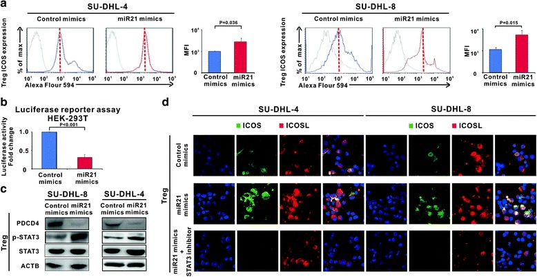 MiR21 induced ICOS expression on Treg cells through p-STAT3 upregulation. a Treg cells were sorted from the co-culture system for further study, ICOS expression on Treg cells was increased by miR21 overexpression in the co-culture systems of SU-DHL-4 and SU-DHL-8 cells . b The effect of miR21 on transcriptional activity of the PDCD4 promoter was measured by luciferase reporter assay in HEK-293 T cells transfected with control mimics or miR21 mimics. c Downregulation of PDCD4 and upregulation of p-STAT3 were detected in Treg cells. d Increased ICOS expression on Treg cells was blocked by the STAT inhibitor (Representative immunofluorescene images of ICOS ( green )/ICOSL ( red ) with cells counterstained with DAPI ( blue ))