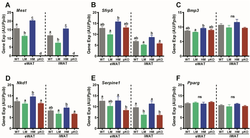 WAT gene expression in mice with inactivated Mest . (A) Data shows expression of Mest , (B) Sfrp5 , (C) Bmp3 , (D) Nkd1 , (E) Serpine1 , and (F) Pparg in epididymal (eWAT) and inguinal (iWAT) white adipose tissue of wildtype (WT; n = 17) mice with a paternal inactivation of Mest (pKO; n = 10) and subgroups of WT mice with low (LM; n = 6) and high (HM; n = 6) WAT Mest expression after being fed a HFD from 8–16 weeks of age. Gene expression was determined via TaqMan qRT-PCR in total RNA from eWAT and iWAT and represented as arbitrary units (AU) normalized to cyclophilin b ( Ppib ). Gene expression is presented as the mean ± SEM and significance between groups was determined using two-tailed unpaired parametric t-tests. Datasets annotated with the same letter indicate no significant differences between groups.