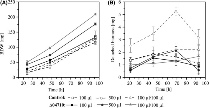 Attached and detached biofilm biomass of Pseudomonas taiwanensis VLB 120ΔCe GFP Δ04710 and the control strain P. taiwanensis VLB 120ΔCe GFP grown in silicone tubes applying single‐phase aqueous flow rates of 100 μl min −1 and 500 μl min −1 or two‐phase aqueous‐air segmented flow of 100 μl min −1 medium and 100 μl min −1 air. Errors bars represent standard deviation of triplicates. A. Total biofilm dry weight ( BDW ) of biofilms grown in 40 cm long silicone tubings. B. Detached biofilm biomass during continuous biofilm cultivation. One data point reflects the amount of biomass in 10 ml effluent.