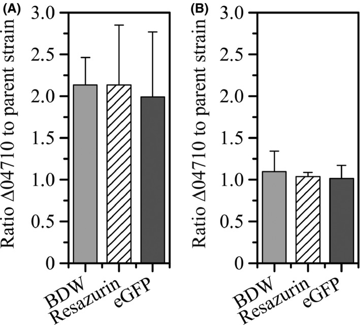 Biofilm dry weight ( BDW ) and viable cells in biofilms determined via the resazurin and eGFP assay. Values are given as a ratio of the quantities of the mutant Pseudomonas taiwanensis VLB 120ΔCe GFP Δ04710 to the parent strain P. taiwanensis VLB 120ΔCe GFP . A. Biofilms after 48 h of standard cultivation under segmented flow conditions. Errors bars represent standard deviation of triplicates. B. Biofilms after 336 h of biotransformation under segmented flow conditions. Error bars represent standard deviation of five replicates.
