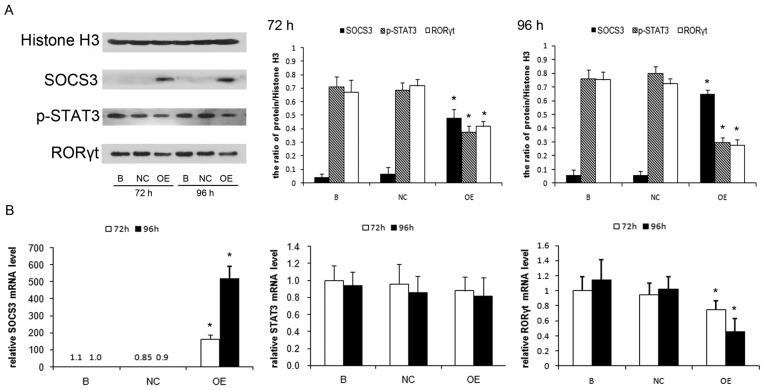 Decreased expression of p-STAT3 and RORγt in Pseudomonas aeruginosa-infected lung CD4+ T cells when stimulated by IL-23 following 72 h and 96 h of lentivirus-mediated SOCS3 gene transfection in vitro. (A) The protein expression of SOCS3, p-STAT3 and RORγt was determined by western blotting analysis. Histone H3 was used as an internal control. Protein quantification was performed by densitometry analysis using Quantity One software. (B) The mRNA level of SOCS3, STAT3 and RORγt was determined by reverse transcription-quantitative polymerase chain reaction analysis. Data are presented as mean ± standard deviation of three separate experiments. *P