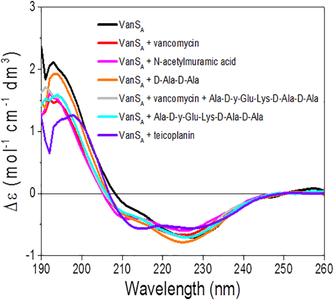 Ligand binding screens of VanS A in the far-UV region (190-260 nm). Difference spectrum of VanS A in the absence and presence of 5-fold molar equivalent of compounds (vancomycin, teicoplanin, N-acetylmuramic acid, D-Ala-D-Ala and Ala-D-y-Glu-Lys-D-Ala-D-Ala).