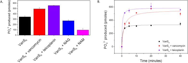Activity of VanS A . (A) In the absence and presence of 5-fold molar equivalent of compounds (vancomycin, teicoplanin, N <t>-acetylmuramic</t> acid, N -acetylglucosamine). (B) Activity profiles of VanS A in the absence and presence of vancomycin and teicoplanin over 40 min. Standard deviations calculated for each condition ( n = 3) and plotted as error bars.