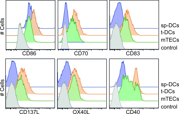 Expression of costimulatory molecules by thymic APCs APCs were enriched from thymi and spleens of BALB/c mice by enzymatic digestion and gradient centrifugation. Expression of CD86, CD70, CD83, CD137L, OX40L and CD40 was analyzed on gated CD45 − EpCAM + Ly51 − mTECs, CD45 + CD11c hi Lin − t-DCs and CD11c hi Lin − sp-DCs (Lin defined as CD90, CD49b, F4/80 and CD19) by flow cytometry. Gated CD4SP-Foxp3 − thymocytes were taken as control. Representative histograms from one out of four (CD86 and CD70), five (CD40) or three (CD83, CD137L and OX40L) independent experiments are depicted.
