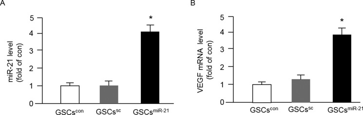 Up-regulation of <t>miR-21</t> by miR-21 mimic transfection increased VEGF mRNA expression in GSCs The purified GSCs were transfected with miR-21 for 48 hrs, and the levels of miR-21 and VEGF were determined by <t>qRT-PCR.</t> ( A – B ) the levels of miR-21 and VEGF in different types of GSCs; * p