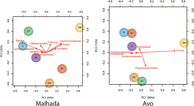 Principal component of endophytic, wood colonizing bacterial communities at different phylogenetic levels from pine trees of six different symptomatic classes from the two sampling areas ( A : Malhada B : Avo) based on sequencing of PCR amplified 16S rRNA gene fragments.