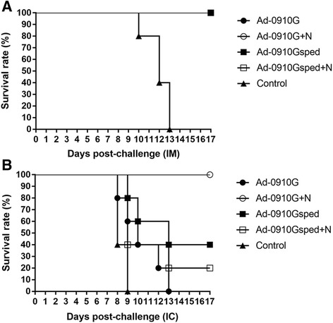 Survival rates of mice immunized with recombinant adenoviruses expressing RABV G and N protein after RABV CVS-N2c challenge. Mice in each group were inoculated with 0.2 mL of each virus (Ad-0910G and Ad-0910Gsped) or mixed virus (Ad-0910G + Ad-0910 N and Ad-0910Gsped + Ad-0910 N) by the intramuscular route. Mice in the control group were inoculated with an equal volume of PBS. Five immunized mice from each group were challenged intramuscularly (IM) with 30 μL of CVS-N2c (25 LD 50 /0.03 mL) 21 days following inoculation of recombinant adenoviruses ( a ). The remaining five mice in each group were challenged via the intracranial (IC) route ( b ). After challenge, the survival of mice was checked daily for 3 weeks