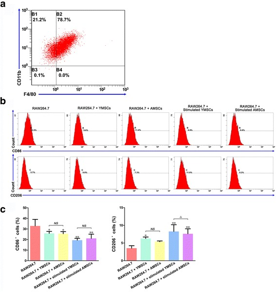 Cell surface markers (analyzed via flow cytometry) in RAW264.7 cells before or following coculture with BMSCs. a Markers CD11b and F4/80 in RAW264.7 cells before coculture. b Markers for M1 Mφs (CD86) and M2 Mφs (CD206) in RAW264.7 cells following coculture with YMSCs and AMSCs (with or without IFNγ stimulation); RAW264.7 cells without coculture served as control. c Data analysis of cell surface markers (CD86 and CD206) following coculture. Data presented as mean ± standard deviation. *p