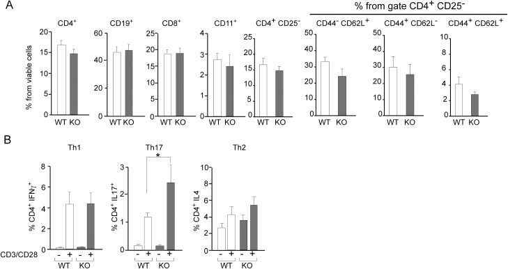 Gal-8 deficit favors selective Th17 cell differentiation upon polyclonal activation. Splenocytes isolated from Lgals8 +/+ (WT) and Lgals8 -/- (KO) mice were analyzed by FACS: (A) Dendritic cells (CD11c + ), B cells (CD19 + ), CD8 + T cells and different CD4 + T cells subsets, naïve (CD44 - CD62L + ), effector (CD44 + CD62L + ), memory (CD44 + CD62L - ) and total cells analyzed in the subset of viable CD4 + CD25 - T-cells show no differences between WT and KO mice. Graphics of frequency +/-SD (n = 5). (B) T cell activation by 72 h incubation with anti-CD3 (anti-CD3) and anti-CD28 (anti-CD28) antibodies show Th17 increased frequency in KO mice while Th1 and Th2 cells are similar in WT and KO mice. Graph shows frequency +/-SD (*p