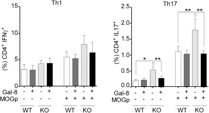 Gal-8 deficit favors Th17 polarization during MOGp-induced EAE and ex-vivo re-stimulation. Th17 and Th1 subpopulations in splenocytes from Lgals8 -/- (KO) and Lgals8 +/+ (WT) mice obtained after 10 days of EAE induction were analyzed either immediately or after 72 h of ex vivo MOGp re-stimulation, in the absence or presence of Gal-8. Gal-8 KO mice show higher frequency of Th17 cells both at steady state and after MOGp re-stimulation. Incubation with Gal-8 reduced Th17 cells only in Gal-8 KO. Graph shows frequency +/-SD (*p