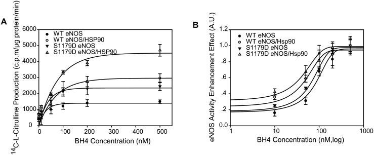 Hsp90 did not enhance either WT eNOS or S1179D eNOS affinity to BH4. (A) Hsp90 augmented both WT eNOS and S1179D eNOS activity capacity in the presence of BH4. The effect of Hsp 90 on enzymatic activity of WT eNOS and S1179D eNOS was assayed by monitoring the conversion rate of L-14C-arginine to L-14C-citrulline in the presence of indicated concentration of BH4 (n = 5). (B) BH4-eNOS activity dynamic assay showed that Hsp90 did not change either WTeNOS or mutant S1179D sensitivity to BH4 (EC50, P > 0.05; n = 5). In contrast, mutation of S1179D significantly enhanced eNOS affinity to BH4 compared to their WT eNOS control in the absence or presence of Hsp90 (EC50, P