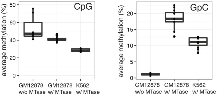 Average CpG and GpC methylation levels in single cells. Boxplots representing the methylation level at CpG and GpC dinucleotides for groups of cells (GM12878 w/ and w/o MTase,K562 w/ MTase). GM12878 and K562 cells show different levels of CpG methylation. The difference in CpG methylation between GM12878 w/o MTase and GM12878 w/ MTase treatment was largely driven by two cells. These cells were kept as no other criterion suggested their removal. GpC MTase treated cells shows a clear enrichment of GpC methylation while GM12878 cells not exposed to MTase do not show levels above 1%. These might reflect incomplete conversion, minimal cross-contamination during the parallel preparation, or activity of endogenous methyltransferases. DOI: http://dx.doi.org/10.7554/eLife.23203.008