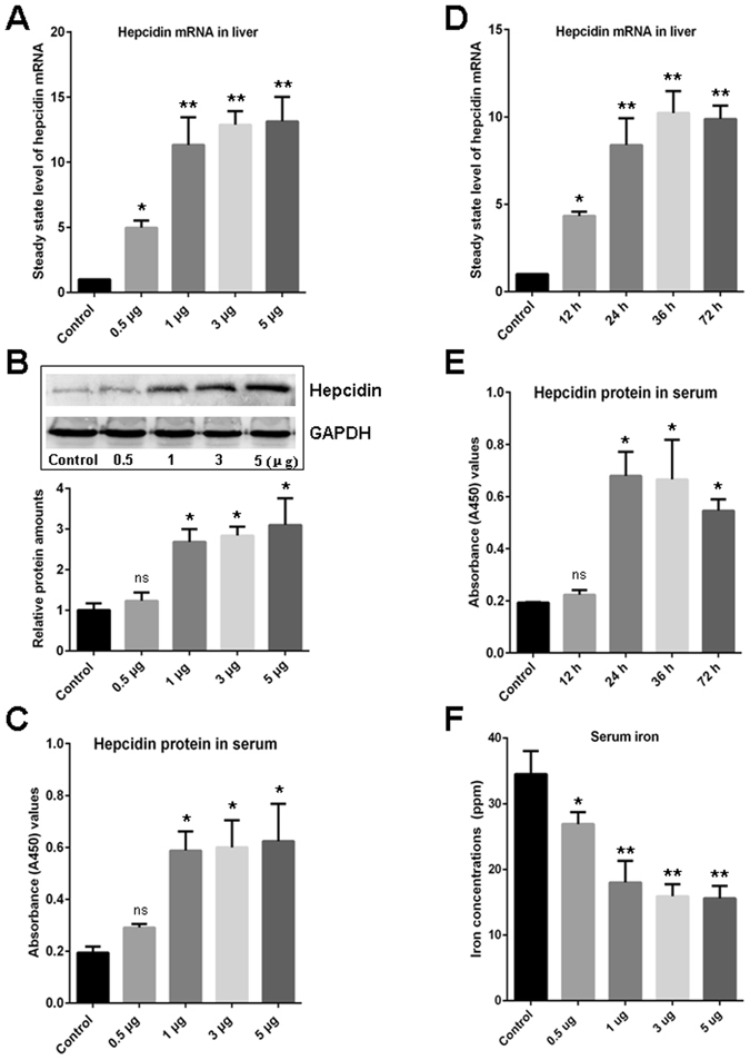 Evaluation of the induced expression of hepcidin and reduced serum iron concentration upon A. hydrophila DNA stimulation. ( A ) Detection of the steady state level of hepcidin mRNA in liver upon stimulation with various concentrations of A. hydrophila DNA (0.5, 1, 3, and 5 μg per fish) by Q-PCR. ( B and C ) Detection of the hepcidin protein level in serum upon stimulation with various concentrations of A. hydrophila DNA (0.5, 1, 3, and 5 μg per fish) by Western blot ( B ) and ELISA ( C ), and the gray value of the relative signal intensity (hepcidin/GAPDH) in Western blot analysis was calculated using ImageJ program and depicted in a bar graph. ( D ) Time-dependent upregulation of the steady state level of hepcidin mRNA in liver upon stimulation with A. hydrophila DNA (1 μg per fish) as determined by Q-PCR. ( E ) Time-dependent upregulation of the hepcidin protein in serum upon stimulation with A. hydrophila DNA (1 μg per fish) as determined by ELISA. ( F ) Reduced concentrations of serum iron stimulated by A. hydrophila DNA (0.5, 1, 3, and 5 μg per fish) were detected by ICP-MS. The control groups in each experiment (indicated as Control) received mock PBS. The steady state level of hepcidin mRNA in liver was calculated by 2 −ΔΔCT method normalized to β-actin. All data are representative of at least three independent experiments. A significant difference was detected between each experimental and control group. *p