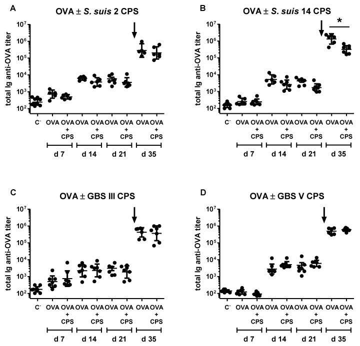"""In vivo immunomodulatory effect of purified native S. suis serotype 2, S. suis serotype 14, GBS serotype III or GBS serotype V CPS on ovalbumin (OVA)-specific antibody response. Mice ( n = 8) were co-immunized intraperitoneally with 10 µg of OVA and 2 µg of purified native S. suis serotype 2 ( A ), S. suis serotype 14 ( B ), GBS serotype III ( C ) or GBS serotype V ( D ) CPS in PBS on Days 0 and 21. Control group ( n = 8) received OVA only on Days 0 and 21. Total Ig (IgG plus IgM) anti-OVA titers were determined by ELISA on Days 7, 14, 21 and 35. """"C − """" represents a pool of placebo mice ( n = 3) injected with PBS, whose titers were evaluated on Days 7, 14, 21 and 35. Data from individual mice are presented, including the geometric mean with 95% confidence interval. An arrow indicates secondary immunization. * p"""