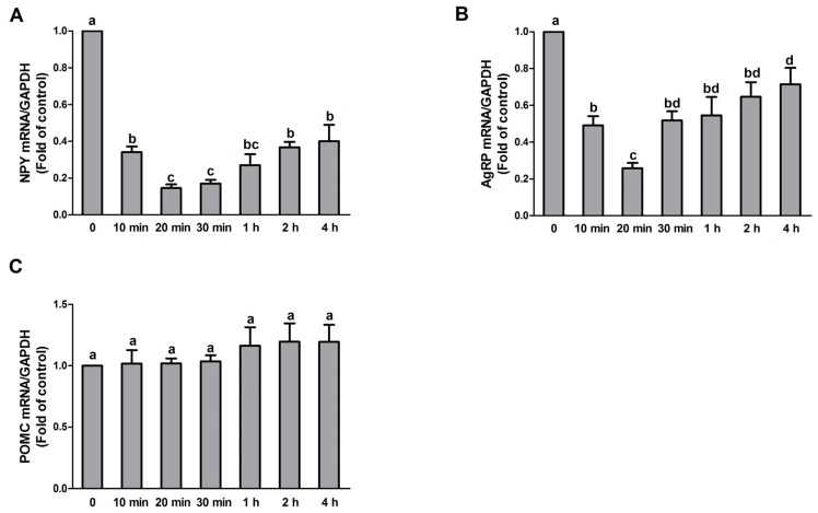 Time-dependent effect of PA on NPY, AgRP, and POMC expression in N1E-115 cells. Quantitative real-time <t>PCR</t> analysis of NPY, AgRP, and POMC performed with <t>RNA</t> extracted from N1E-115 cells treated with 10 μmol/L PA for different durations ( A – C ), respectively. Quantified mRNA levels were normalized to GAPDH and presented relative to 10 μmol/L PA for 0 min. Data are expressed as means ± SEM of three different experiments. Groups sharing different letters above the bars indicate statistically significant differences ( p