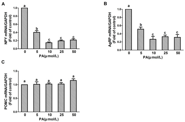 Dose-dependent effect of PA on NPY, AgRP, and POMC expression in N1E-115 cells. Quantitative real-time PCR amplification of NPY, AgRP, and POMC performed with RNA extracted from N1E-115 cells following treatment with differing concentrations of PA for 20 min ( A – C ), respectively. Quantified mRNA levels were normalized to GAPDH and presented relative to 0 μmol/L PA for 20 min. Data are expressed as means ± SEM of three different experiments. Groups sharing different letters above the bars indicate statistically significant differences ( p