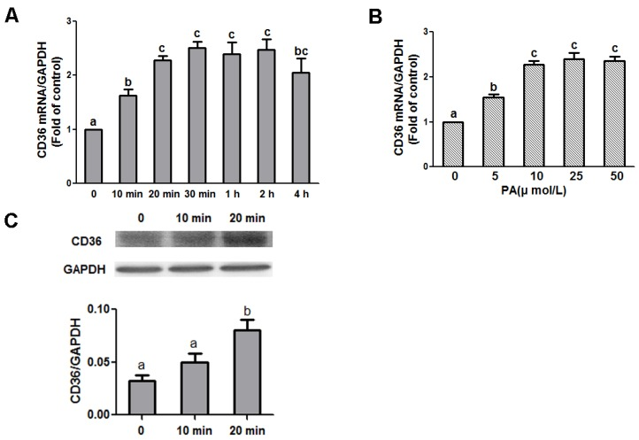 Effect of PA on CD36 expression in N1E-115 cells. Quantitative real-time PCR amplification of CD36 performed with RNA extracted from N1E-115 cells treated with 10 μmol/L PA at different time points ( A ) or different concentrations of PA for 20 min ( B ), respectively. ( C ) Representative Western blot analysis of CD36 protein in N1E-115 cells induced by 10 μmol/L PA at 0, 10, and 20 min. Data are expressed as means ± SEM of three different experiments. Groups sharing different letters above the bars indicate statistically significant differences ( p
