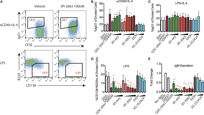 IPI-3063 potently promotes mouse B cell antibody switching and inhibits plasmablast differentiation. Purified B cells were pretreated with inhibitors, then stimulated with αCD40 + IL-4 (B) or LPS + IL-4 (C) for 96 h to induce switching to <t>IgG1</t> or LPS (D) for 72 h to induce plasmablast differentiation. Class switching to IgG1 was measured by the 7AAD − CFSE lo B220 + IgG1 + cells [ (A) , upper panels]. Plasmablast percentages were calculated by % 7AAD − CFSE lo CD138 + B220 lo population [ (A) , lower]. Supernatant was harvested (E) for <t>IgM</t> ELISA. Concentrations used were 1 nM, 10 nM, 100 nM, 1 µM for IPI-443 and 1, 10, 30, 100 nM for IPI-3063. Low concentrations of IPI-3063 were 0.01 and 0.1 nM (D) . AS252424 concentrations were 100 nM, 300 nM, and 1 µM, and GDC-0941 was at 500 nM. Samples were collected by time (* P