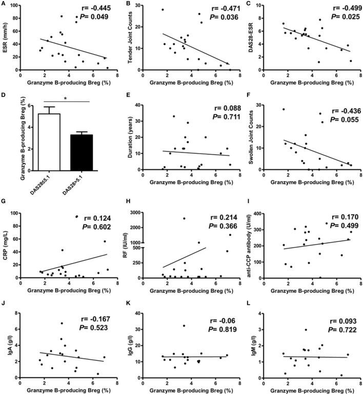 Correlation analysis of granzyme B (GrB)-producing regulatory B cell (Breg) with rheumatoid arthritis (RA) patient clinical manifestations. The frequencies of GrB-producing Breg were negatively correlated with RA patient ESR (A) , tender joint counts (B) , and DAS28-ESR (C) . The frequency difference of GrB-producing Breg was also analyzed between RA patients with high disease activity (DAS28 > 5.1) and non-high disease activity (DAS28 ≤ 5.1) (D) . The correlation of GrB-producing Breg with RA patient swollen joint counts (E) , CRP (F) , disease duration (G) , rheumatoid factor (RF) (H) , anti-CCP antibody (I) , serum IgA (J) , IgG (K) , and IgM (L) was also analyzed. * P