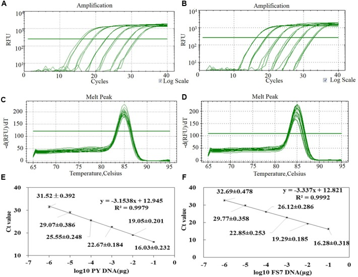 Assessment of the method for the quantification of P. expansum genomic DNA through qPCR based on the primers pair patF-F/patF-R. (A,B) Amplification curves of a set of six 10-fold serial dilutions of genomic DNA from strains PY and FS7 of P. expansum showing the fluorescence signal plotted versus log of PCR cycle number (blank controls were also performed but fluorescence signal was observed). (C,D) Dissociation curve of the PCR product. (E,F) Standard curve generated by qPCR assay using 10-fold serial dilutions of pure genomic DNA from strains PY and FS7 of P. expansum ; Ct values were obtained for each dilution and plotted versus known quantities of genomic DNA used in the analyses.