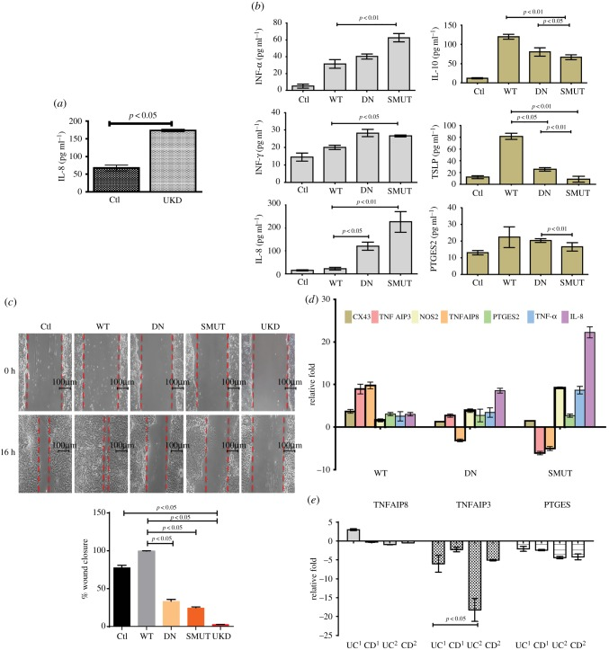 SUMOylation-deficient Akt1 exacerbates inflammation accompanied with impaired wound healing. ( a ) Values of IL-8 ELISA of supernatants from HCT-8 cells knocked-down for Ubc9 (UKD) or untreated cells. ( b ) ELISA of indicated cytokine with supernatants from HCT-8 cells transfected with WT-Akt1, DN-Akt1 (kinase dead) and SMUT-Akt1 (SUMO-deficient) plasmids. ( c ) Cell migration assessed by wound-healing assay in untreated (Ctl) or WT-Akt1, kinase dead Akt1 (DN) and SUMOylation-deficient Akt1 encoding plasmid transfected HCT-8 cells and Ubc9 knocked-down cells (UKD). The wound closure scores with statistics are plotted (lower panel), which show the compromised healing seen in SMUT and UKD samples. ( d ) qRT-PCR gene expression of wound-healing and inflammatory markers in WT-Akt1, DN-Akt-1 (kinase dead) and SMUT-Akt1 (SUMO-deficient) samples compared with control. ( e ) qRT-PCR gene expression of TNFAIP3, TNFAIP8 and PTGES in human IBD patient samples. UC 1 and CD 1 correspond to UC UBC9-Low and CD UBC9-Low , respectively. UC 2 and CD 2 correspond to UC UBC9-HyperLow and CD UBC9-HyperLow , respectively. For qRT, GAPDH and HPRT were taken for normalization.