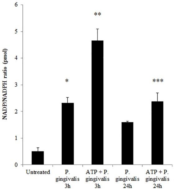 P. gingivalis modulates NADPH consumption in GECs. Measure of NADP/NADPH ratio in P. gingivalis (MOI100) infected GECs with or without ATP (3 mM) pre-treatment. N = 3, * p