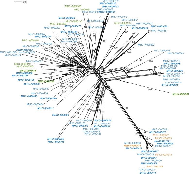 Neighbor-net network of sedge warbler MHC class I exon 3 alleles constructed from all cDNA and gDNA alleles detected in four individuals, alleles marked with bold and italics were found only in gDNA amplicons. Bootstrap support values (based on 1000 replicates) higher than 70% are presented. The loops imply areas of phylogenetic uncertainty or reticulations. 3 bp deletion alleles are shown in orange , 6 bp deletion alleles in green and alleles with no deletion in blue