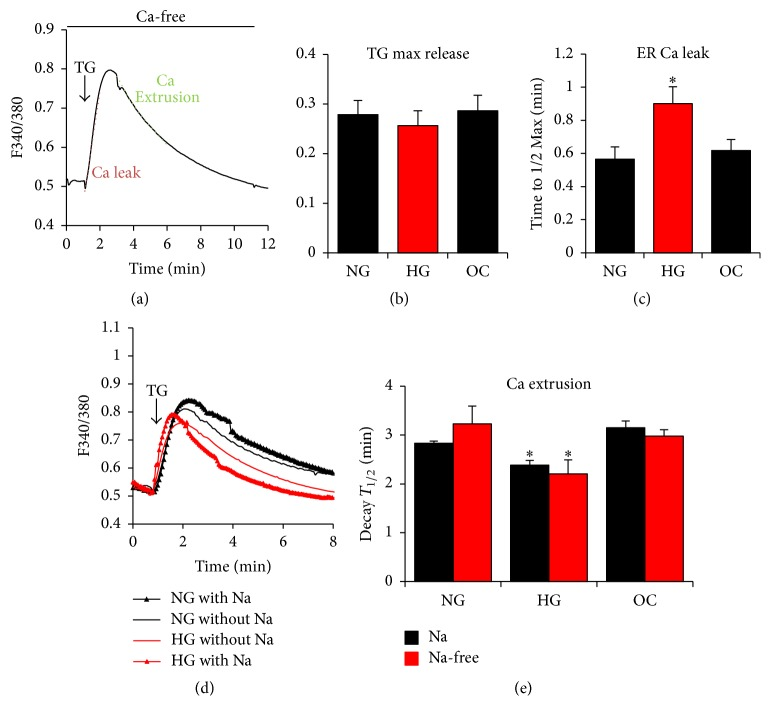 Effect of glucose on Ca 2+ leak and Ca 2+ extrusion in A7r5 VSM cells. A7r5 cells, cultured under HG, NG, and OC, were loaded with Fura2-AM and passive leak was monitored after store depletion with 1 μ M thapsigargin (TG), an irreversible SERCA inhibitor (a). Peak amplitude in response to TG (TG max release) and the time to maximum release are shown (b, c). Ca 2+ extrusion, which is presumed to be due to the combined activity of PMCA and NCX, was monitored as the decay of the TG-induced Ca 2+ transient in Ca 2+ free conditions to avoid Ca 2+ influx. To inhibit NCX, sodium was replaced with equimolar concentration of N-methyl-D-glucamine (d-e). Time to half ( T 1/2 ) decay was then measured and compared between the different conditions (d-e). Data are presented as mean ± SE from at least three independent experiments done each in triplicate. ∗ p