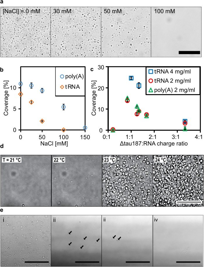 Tau-RNA droplets form a complex coacervate phase. (A) Representative bright-field images of <t>tau-tRNA</t> droplet samples at room temperature with varying [NaCl]. (B) Droplet coverage (in %) with poly(A) or tRNA in room temperature with varying [NaCl]. Δtau187:RNA in (A) and (B) were maintained at a mass ratio of 7:1 (corresponding to a charge ratio of 1.2:1) and a total mass concentration of 2 mg/ml. (C) Droplet coverage with poly(A) or tRNA with varying Δtau187: RNA charge ratios. The total mass concentrations are indicated in the legends. Samples made by mixing of 80 μM Δtau187 with 222 μg/ml poly(A)/tRNA or 161 μM Δtau187 with 444 μg/ml tRNA gave the highest droplet coverage (%), which correspond to charge ratio of 1.3–1.2 between tau and RNA. Error bars in (B) and (C) represent the standard deviation from n = 3. (D) Representative bright-field images of tau-RNA droplets as a function of incubation temperature. To record these images, the temperature was ramped from 19ºC to 25°C at 1°C per minute to acquire confocal images with bright field illumination. The samples for these images are generated from 100 μM tau mixed with poly(U) at approximately 1:1 charge ratio in the presence of 30 mM NaCl. (E) Representative bright-field images of tau-RNA droplet samples incubated at <t>37°C</t> under otherwise different sample conditions. The concentration for tau, poly(U) RNA and NaCl are (i) 5 μM, 15 μg/ml, 0 mM; (ii) 5 μM, 15 μg/ml, 100 mM; (iii) 2.5 μM, 7.5 μg/ml, 100 mM; (iv) 1 μM, 3 μg/ml, 100 mM. Arrows highlight some of the droplets in images (ii) and (iii). Through Fig 5, scale bars are for 50 μm and all samples were prepared with Δtau187/322C in 20 mM ammonium acetate at pH 7.0. The numerical data used in (B) and (C) are included in S1 Data .