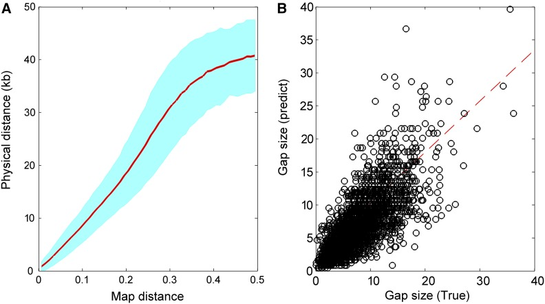 Gap-size estimation. (A) The relationship between map distance and true physical distance. The inter-contig map distances are obtained from the RadMap assembly generated using the MiSeq PE300 data set and the corresponding true physical distances are determined according to the reference genome. The map distances range from 0 to 0.5 and are split into 50 bins. The red line refers to the average physical distance of pairs of markers for each bin, and the cyan region denotes the corresponding SE region. Note only the pairs of markers with physical distance no longer than 50-kb apart are included here. (B) Comparison of the true and predicted inter-contig gap sizes. The dashed line indicates the linear least squares fit of y = 0.7752 x + 2496, with the Pearson correlation r of 0.75.