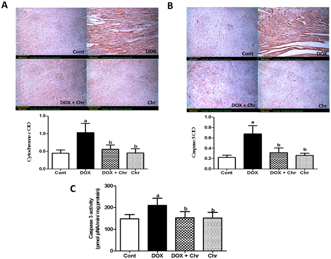 Effect of chrysin on <t>cytochrome</t> c and caspase 3 protein expressions and activity in rats subjected to chronic doxorubicin (DOX) intoxication. ( A ) Protein expression of cytochrome c by immunohistochemical staining. ( B ) Protein expression of caspase 3 by immunohistochemical staining. Scale bar, 50 µm (200x) and quantitative image analysis for immunohistochemical staining was expressed as optical densities (OD) across 10 different fields for each rat section. ( C ) Caspase 3 activity expressed as pmolpNA/min/mg protein. Data are represented as as mean ± SD (n = 10). a or b: Statistically significant from the control or DOX group respectively at P