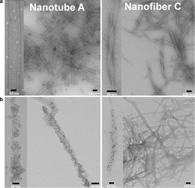 TEM images of nanostructures. a Nanotubes and nanofibers formed from compounds A ( left ) and C ( right ), respectively, stained with uranyl acetate. b TEM images of Ni–NTA Nanogold ® particles bound to the hexa-histidine tagged form I RubisCO and associated with either nanotube A ( left ) or nanofiber C ( right ). Images are representative of multiple samples imaged from independent preparations. For better clarity, a close-up view of a single nanostructure is shown to the left of each image