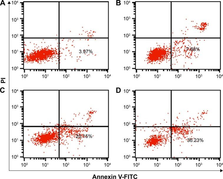 Flow cytometric analysis of the cell apoptosis of PC-3 cells treated with different nanocomplexes for 24 h: ( A ) control, ( B ) PEI25K/siRNA, ( C ) PEI25K/DOX-Duplex and ( D ) PEI/DOX-Duplex/siRNA. Abbreviations: PEI, polyethylenimine; DOX, doxorubicin; PI, propidium iodide; FITC, fluoresceine isothiocyanate.