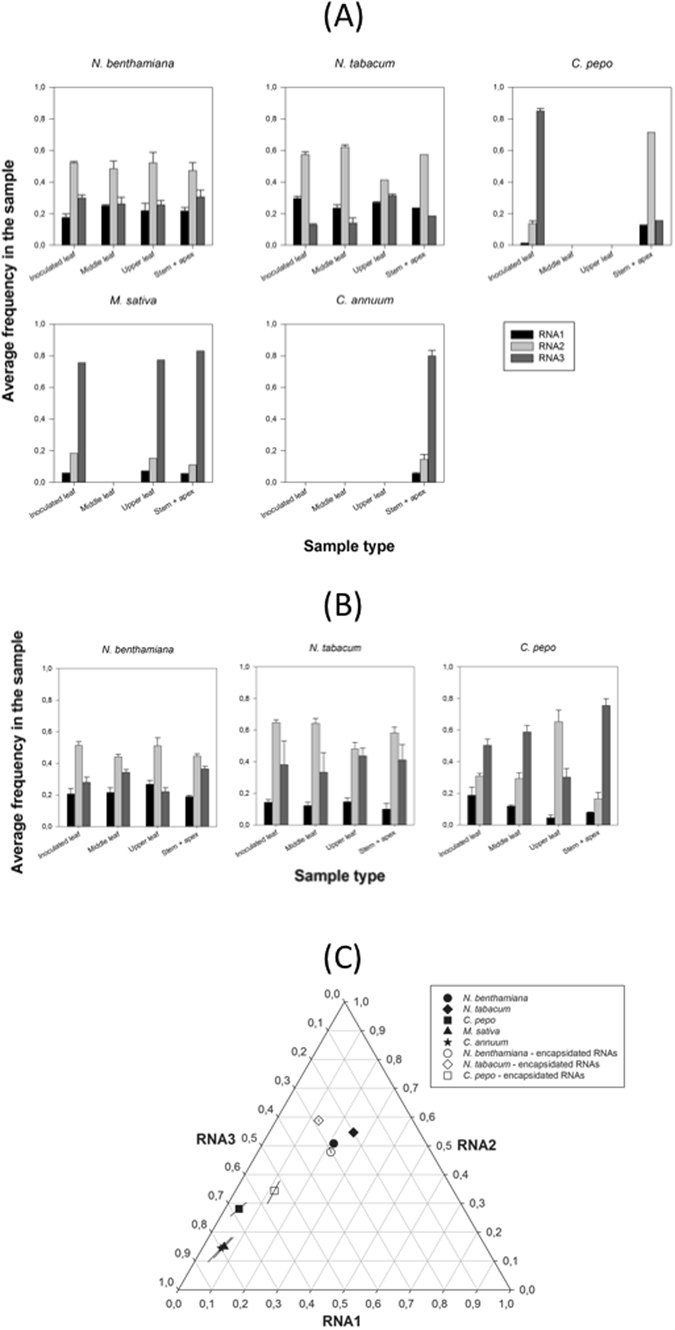 Effect of host species in the accumulation of each genomic segment of AMV. ( A ) Experimental determinations (by RT-qPCR) of the frequency of each AMV genomic in total RNA extractions from five different host species. Bars represent the mean of n = 3 plants per hsot species; error bars represent ±1 SEM. ( B ) As in ( A ) but determined for encapsidated RNAs. No data are available for C. annuum and M. sativa . ( C ) Normalized frequency ternary plot showing the effect of host species in the estimated SGF . Solid symbols represent the marginal mean frequencies estimated from total RNA samples. Open symbols represent the marginal mean frequencies estimated from virion RNA samples. Lines crossing symbols represent 95% CIs.